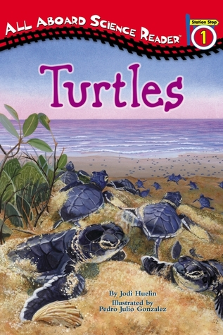 Turtles by Jodi Huelin