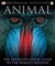 Animal by David Burnie