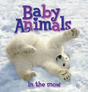 Baby Animals In The Snow