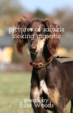 Pictures of Salukis Looking Majestic by Russ Woods