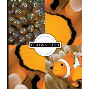 clownfish life cycle