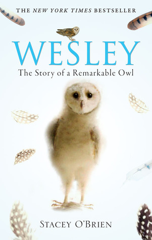 Wesley the Owl by Stacey O'Brien