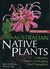 Australian Native Plants by Murray Fage