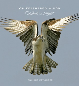On Feathered Wings: Birds in Flight