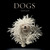 Dogs by Tim Flach
