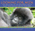 Looking For Miza: The True Story of the Mountain Gorilla Family Who Rescued One of Their Own