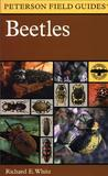 Beetles: A Field Guide to the Beetles of North America