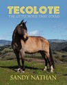 Tecolote: The Little Horse That Could
