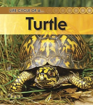 Turtle (Life Cycle of A...(Heinemann Paperback))