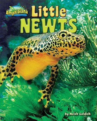 Little Newts by Meish Goldish