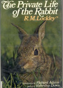 The Private Life Of The Rabbit; An Account Of The Life Histor... by Ronald Mathias Lockley