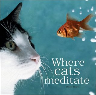 Where Cats Meditate by David Baird