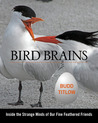 Bird Brains: Inside the Strange Minds of Our Fine Feathered Friends